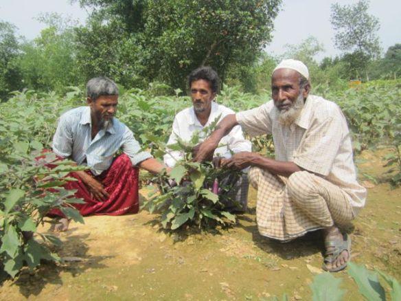 farmers bangladesh